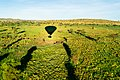 Safari from the sky.jpg