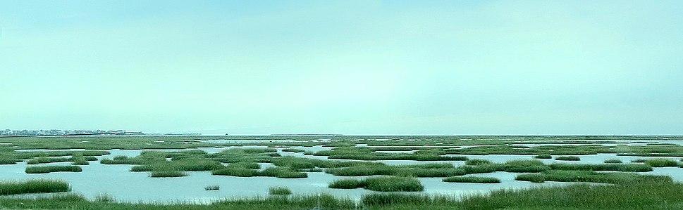 Salt Marsh Near Galveston