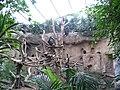 Schimpanseninnen 1670.jpg