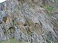 Schist Scotland ss 2007.JPG