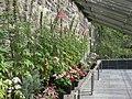 Scotland - Dunvegan Castle 35.JPG