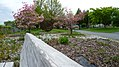 Sculpture Park in Wenatchee near Columbia River in Spring.jpg