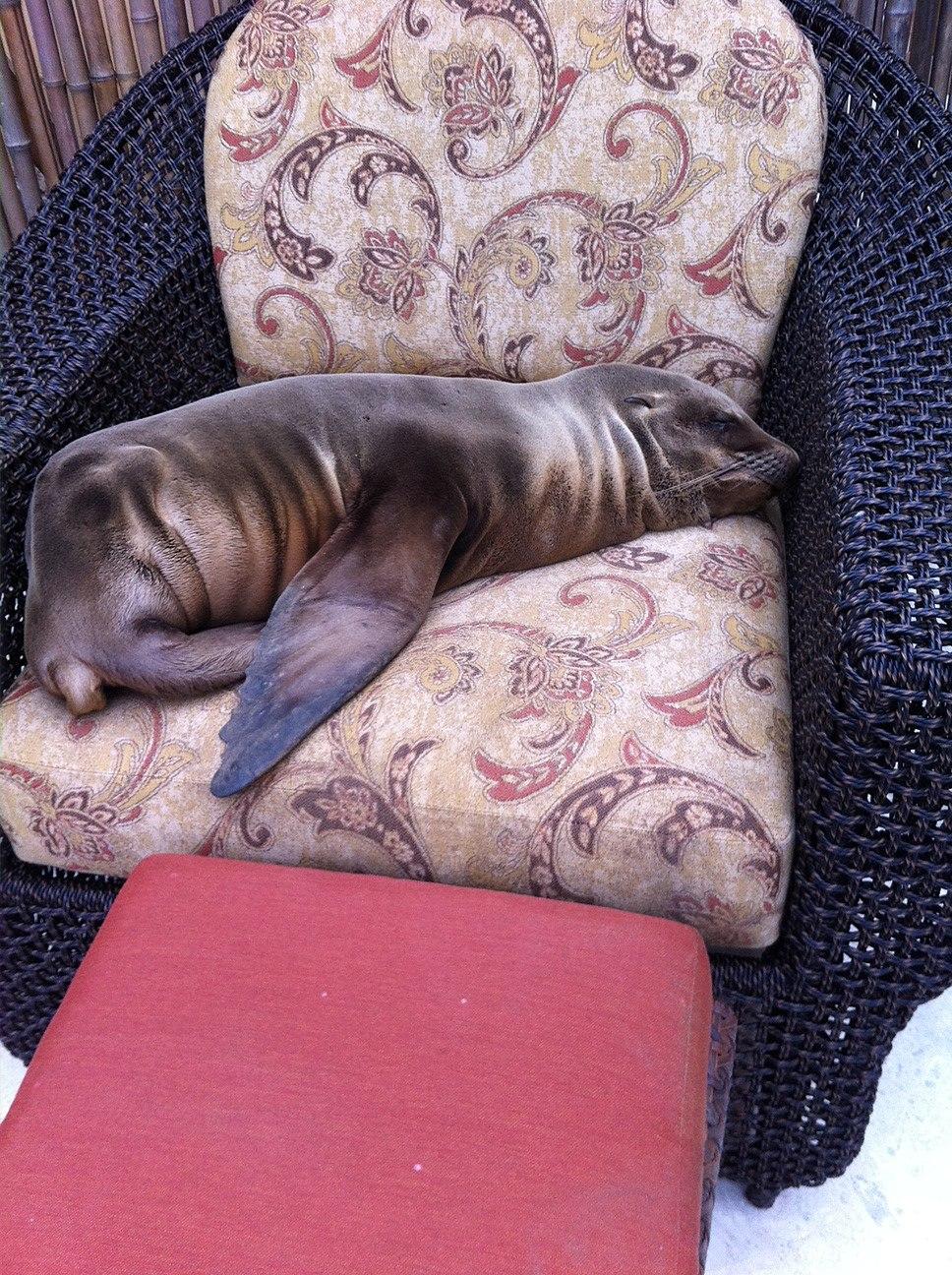Sea Lion Lounging