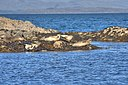 Seal Colony, Garbh Sgeir - geograph.org.uk - 823617.jpg