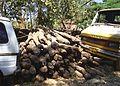 Seized Pterocarpus santalinus Red Sanders logs PIC 0003.jpg