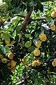 Sentiero dei limoni.jpg