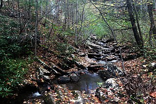 Shawvers Run Wilderness