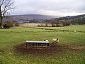 Sheep in Dentdale - geograph.org.uk - 108091.jpg