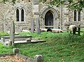 Sheep in the graveyard of St. Luke, Laughton - geograph.org.uk - 545373.jpg