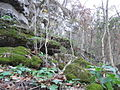 Silene ovata White River Ozark Natl Forest 1.jpg