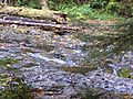 Silver Creek at Silver Falls SP.JPG