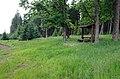 Slavkovský les u Bílé hájenky.jpg