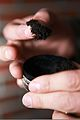 Smokeless tobacco is no healthier than smoking 130226-M-ZB219-007.jpg