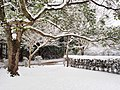 Snow In Takano Park (193235491).jpeg