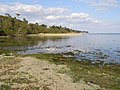 Solent shore near Inchmery House, tide in - geograph.org.uk - 178801.jpg