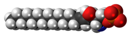 Space-filling model of the sphingosine-1-phosphate anion