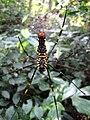 Spider 9851.jpg