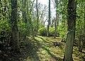 Spinney in Spring - geograph.org.uk - 841461.jpg