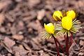 Spring! (3344207306).jpg