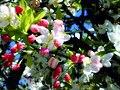 Spring Blossoms - Flickr - Dawn Endico.jpg