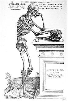 """Résultat de recherche d'images pour """"vésale planche anatomique"""""""