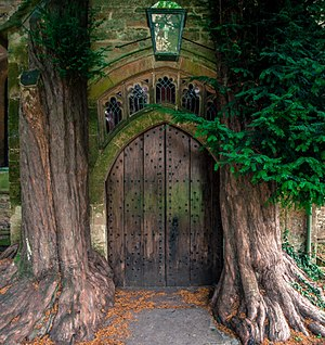 Stow-on-the-Wold - Ancient yew trees at the north porch of to St Edward's Church