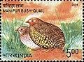 Stamp of India - 2006 - Colnect 158988 - Manipur Bush Quail Perdicula manipurensis.jpeg