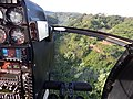 Starr-141014-2192-Caesalpinia decapetala-aerial view-Kakipi Gulch Haiku-Maui (25220933546).jpg