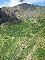 Starr-151005-0196-Aleurites moluccana-aerial view-West Maui-Maui (26217069091).jpg