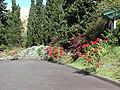 Starr 061201-1776 Euphorbia pulcherrima.jpg