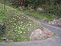 Steep driveway at Symonds Yat West - geograph.org.uk - 757417.jpg