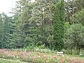 Stepanavan Dendropark 2011 2.jpg