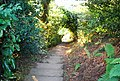 Steps, Footpath to Crockham Hill - geograph.org.uk - 1500979.jpg