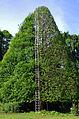 Steps to heaven - Botanical garden Peradeniya.jpg