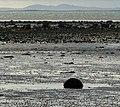 Strangford Lough near Greyabbey - geograph.org.uk - 1040163.jpg