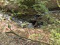 Stream, Rivington - panoramio.jpg