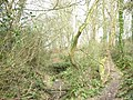 Stream and path at Coed yr Hendy - geograph.org.uk - 375002.jpg