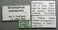 Strumigenys interfectiva casent0178641 label 1.jpg