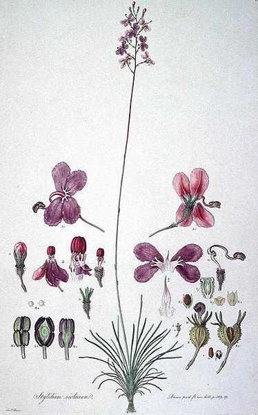 Decorative image of botanical illustration.