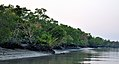Sundarbans in the afternoon 4.jpg