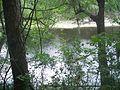Suwannee River State Park river01.jpg