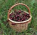 Sweet cherries in basket 2018 G1.jpg