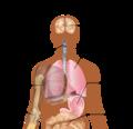 Symptoms of swine flu ua.png