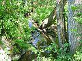 Talbach, Schuttholzer Moor.jpg