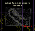 Tammar Luxoro T5 Gon.png