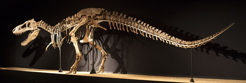 Tarbosaurus baatar skeleton
