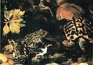 Paolo Porpora - Paolo Porpora, Reptiles, Museo di Capodimonte, Naples