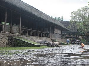Bali Aga architecture - The bale lantang in Tenganan village, a distinctive feature of a Bali Aga village not found in anywhere else in Bali, is an elongated pavilion where the village council discusses community affairs.
