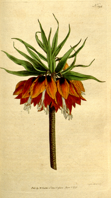 The Botanical Magazine, Plate 194 (Volume 6, 1793).png