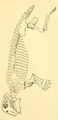 The Osteology of the Reptiles-259 sde er et.png